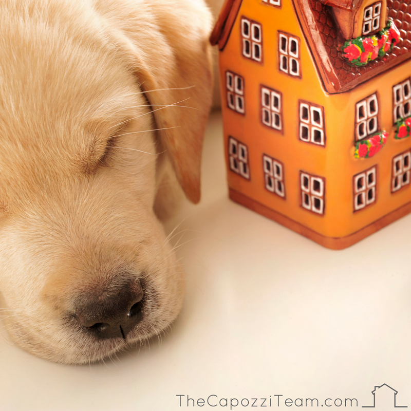 Sleeping lab puppy by ceramic, orange house, text reads thecapozziteam.com